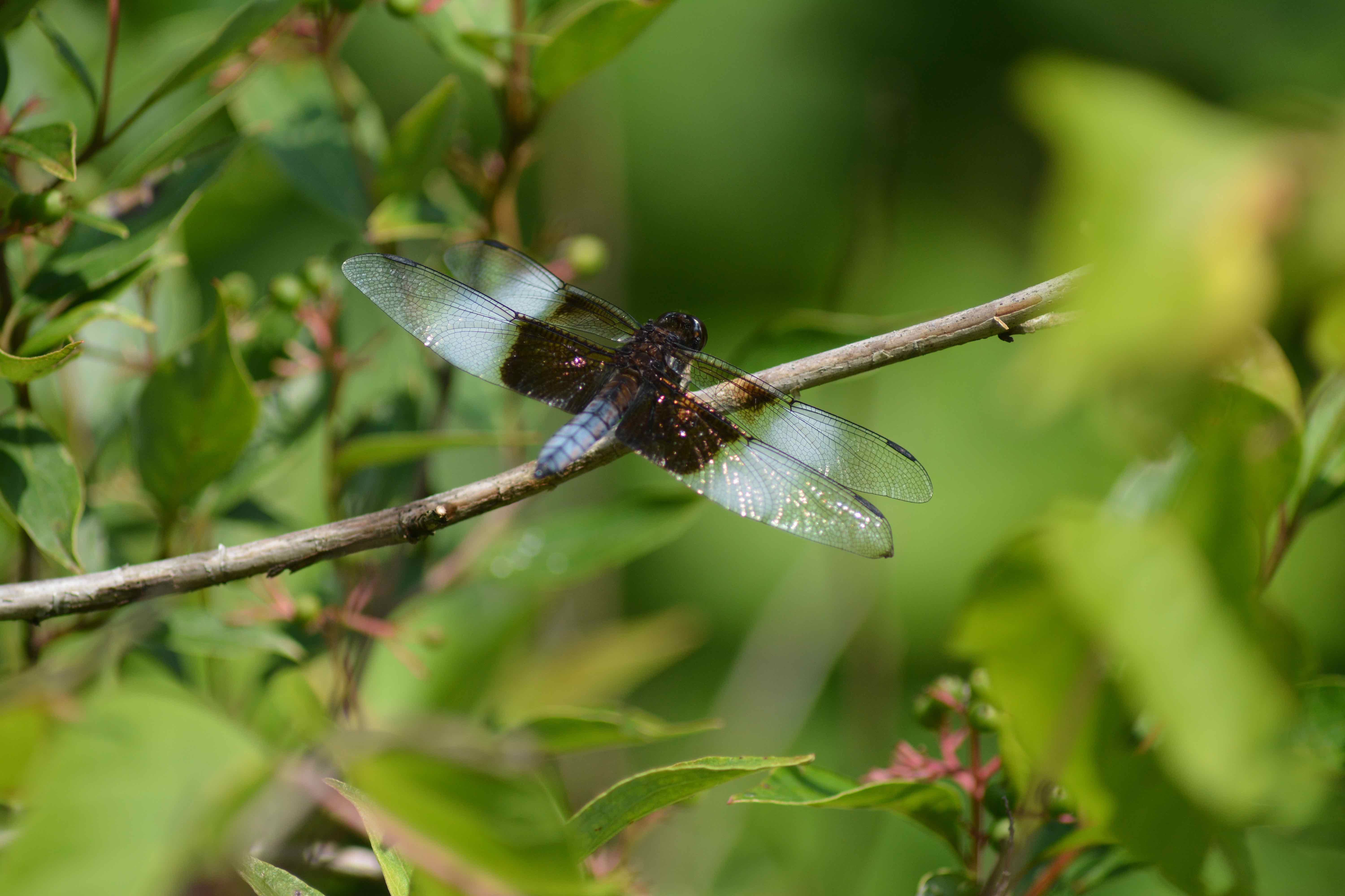 7 dragonfly facts that might surprise you destination nature