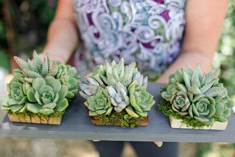5 Amazing Succulent Gift Ideas & 5 Amazing Succulent Gift Ideas for the Gardener in Your Life