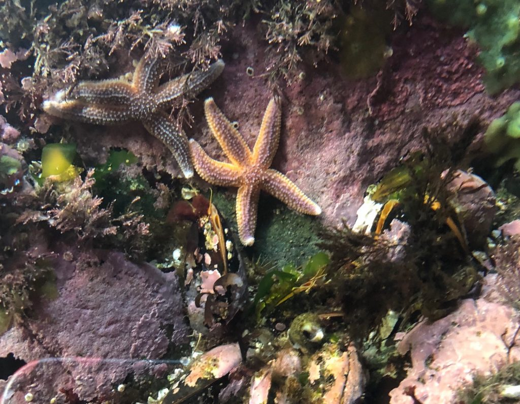 7 Amazing Starfish Facts You Probably Didn't Know